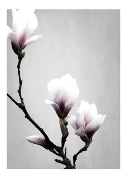 Magnolia - Poster