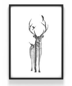 Poster 50x70 Hjort