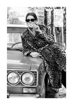 LEOPARD PRINTS AND OLD TIMERS POSTER